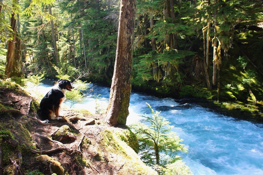 McKenzie River Oregon