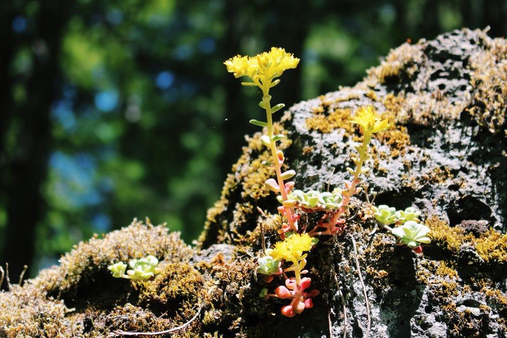 Oregon Plant Life