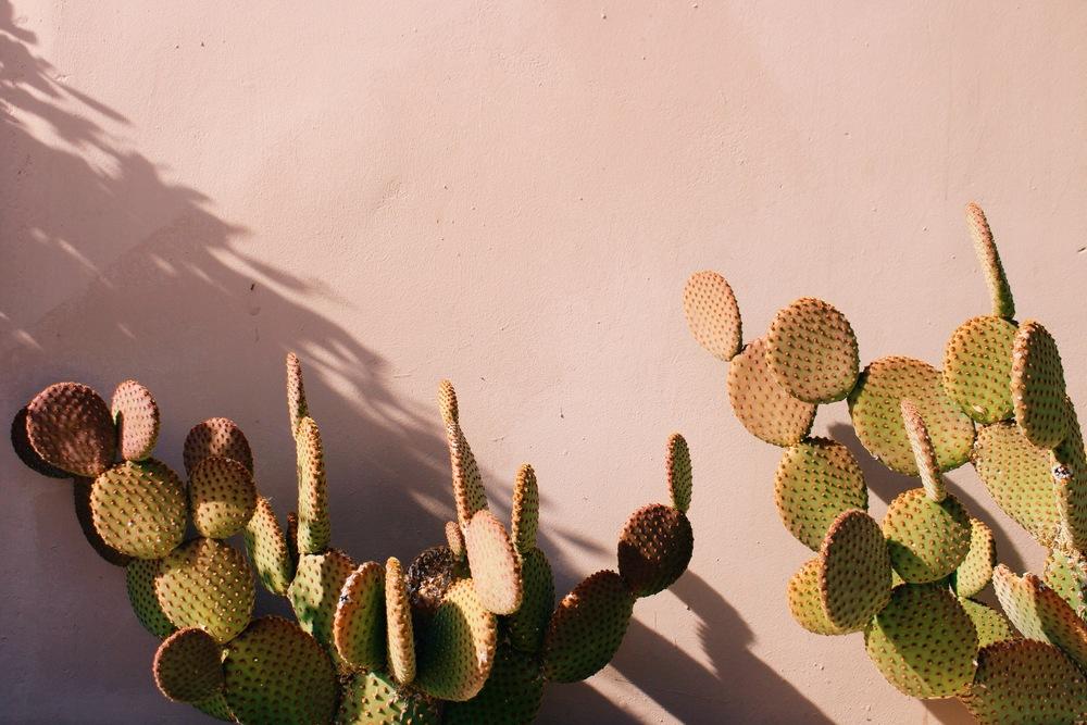 cactus pink wall