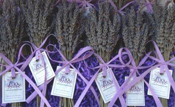 home_lavendar.jpg