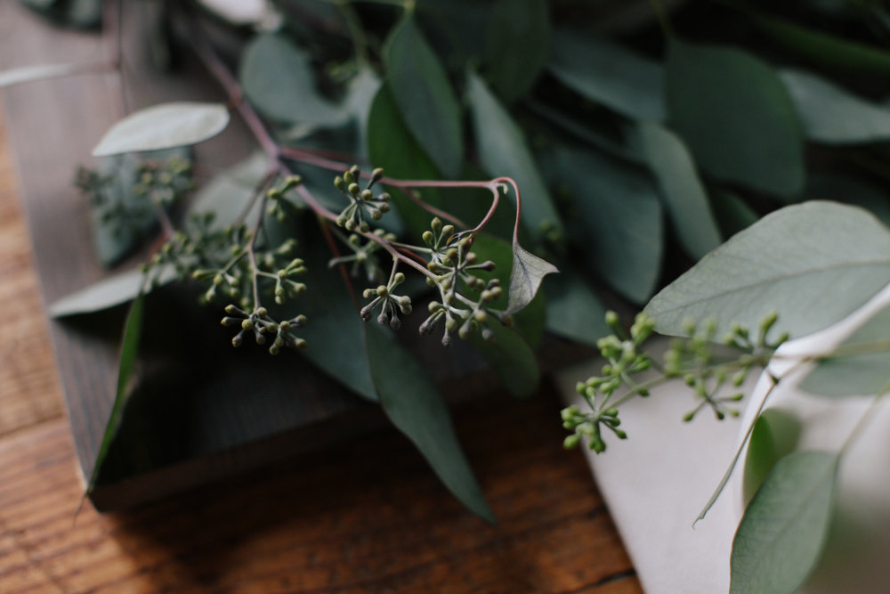 Eucalyptus forever