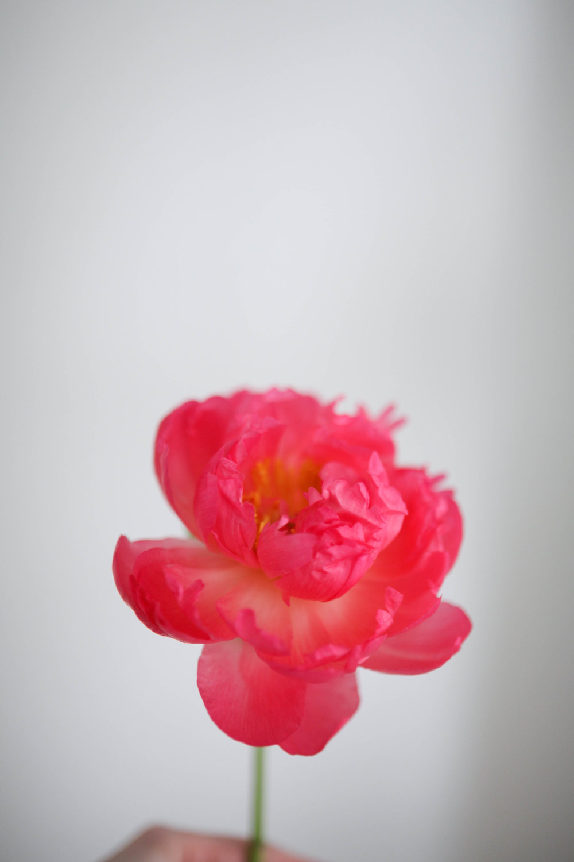 Fleurs-39.jpg