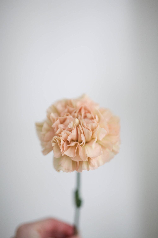 Fleurs-41.jpg