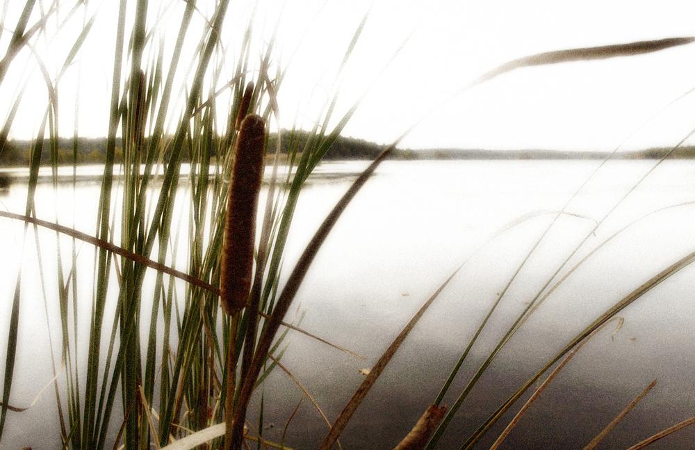 reeds glowing.jpg