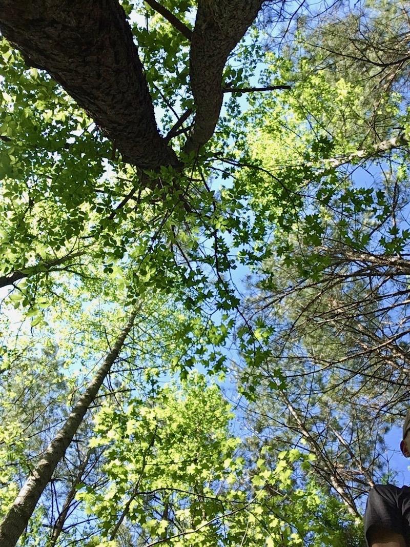 Stony Creek Bluff Trail