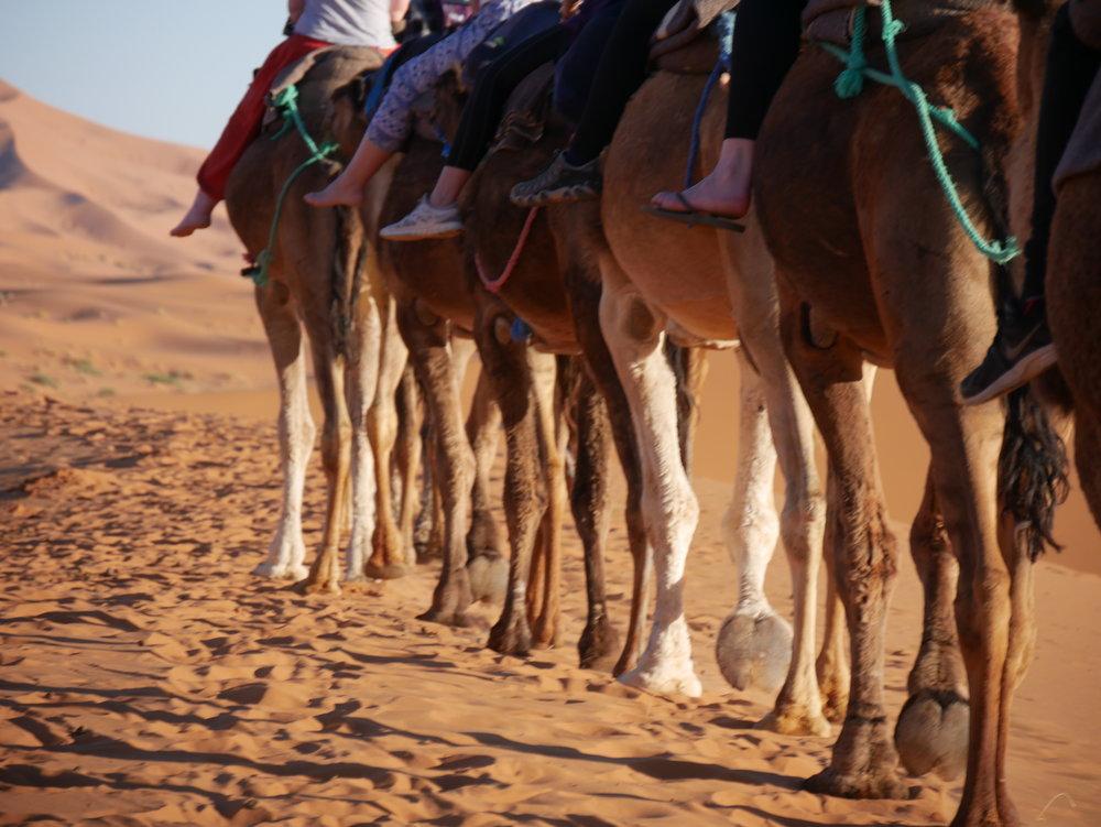2016_03_Morocco0586.JPG