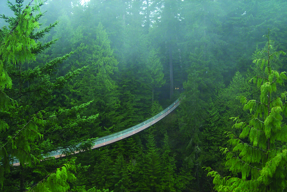 walk through The Rainforest on the capilano suspension bridge