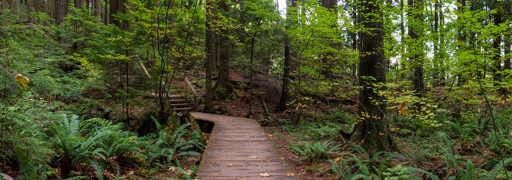 wander the trails in lynn canyon