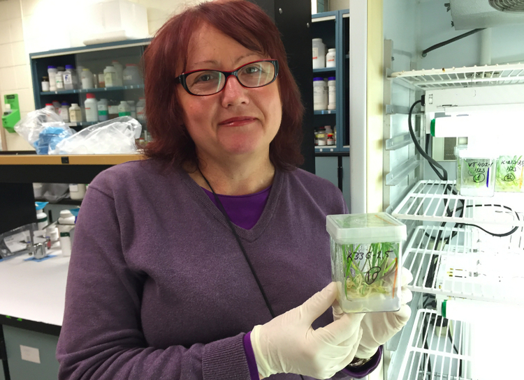 Tanya Filichkin, the head of the barley tissue lab at Oregon State University, holds a cultured container of rooting plantlets. The OSU barley research group pioneered the genetic process of producing double haploids out of anther culture, reducing the time to develop pure lines from 12 years to two.