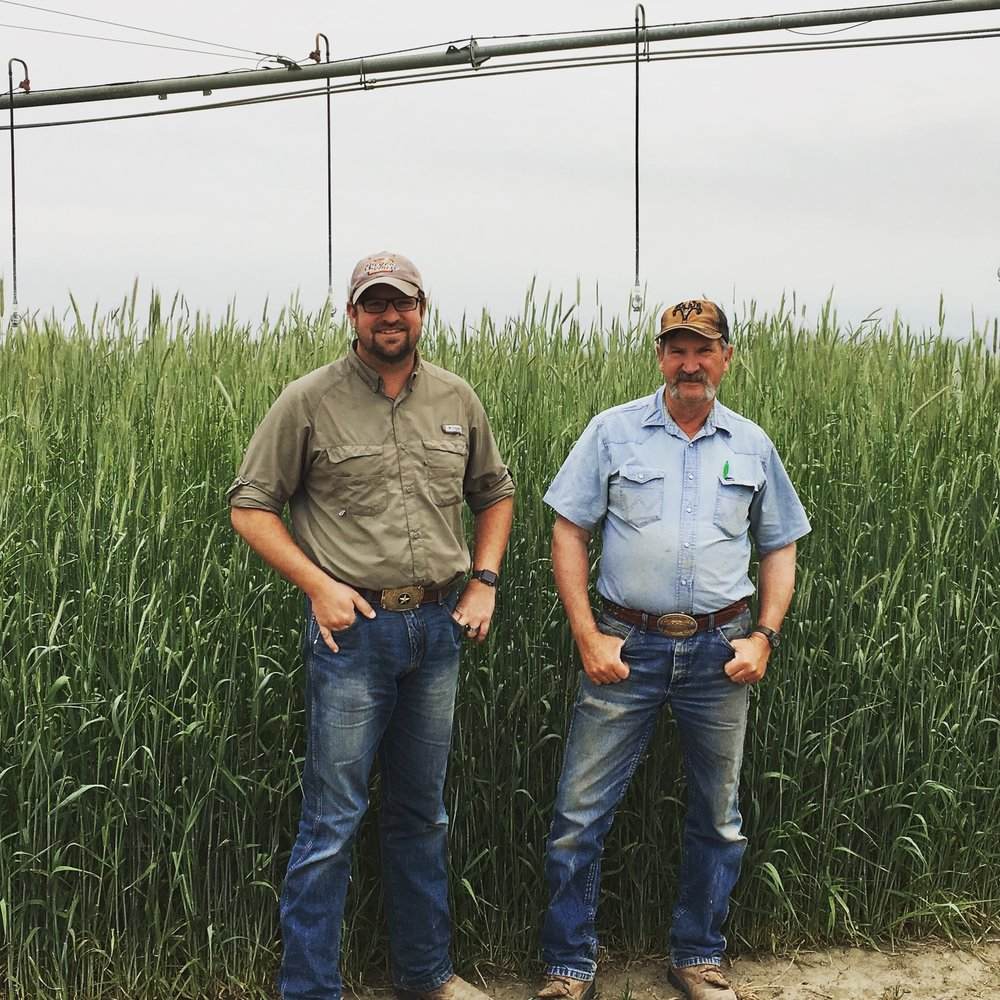Seth and Brad Klann standing next to their field of heirloom malting rye