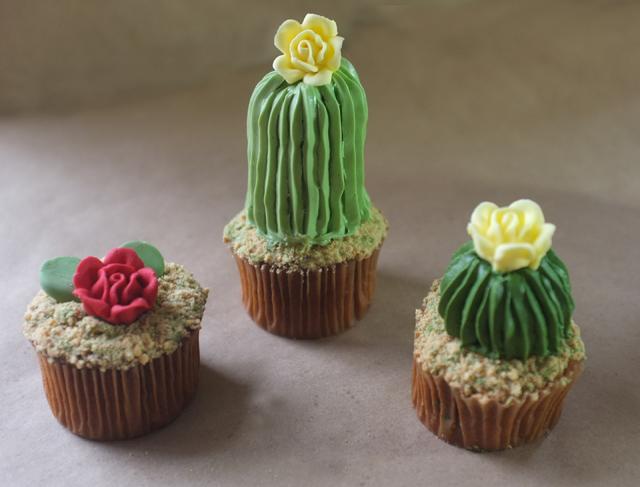 ribbed-cacti.jpg