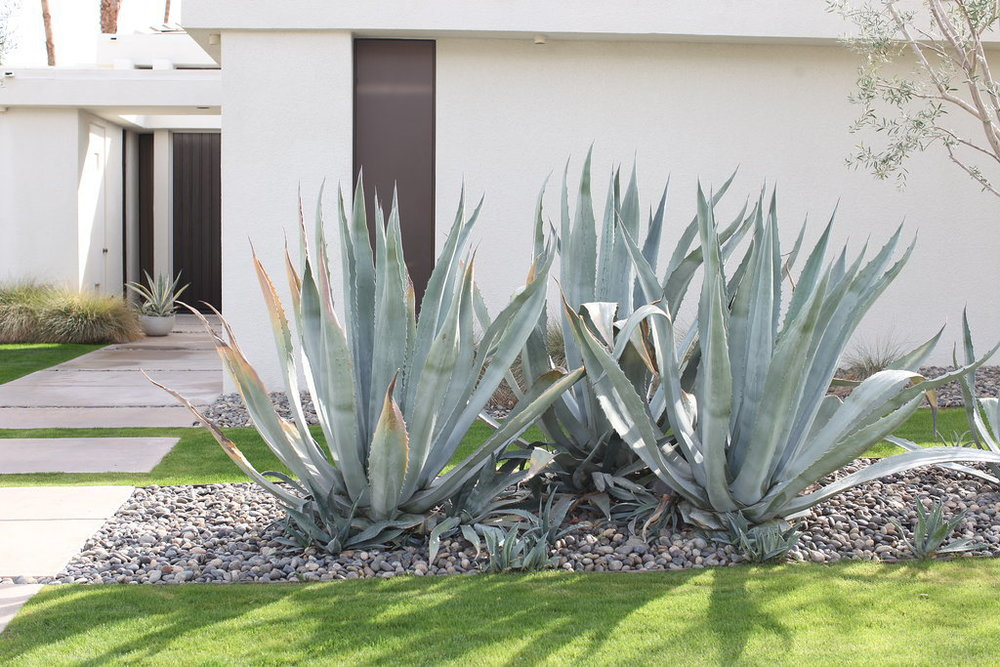 Indian-Canyons-Palm-Springs-Home-Pictures.jpg