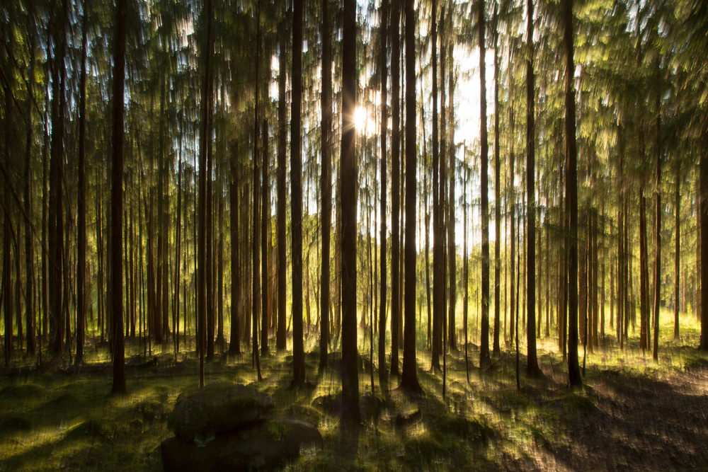 Skog + Solnedgång + Konst