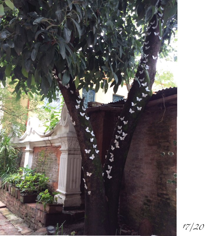 Baber Mahal Butterfly tree