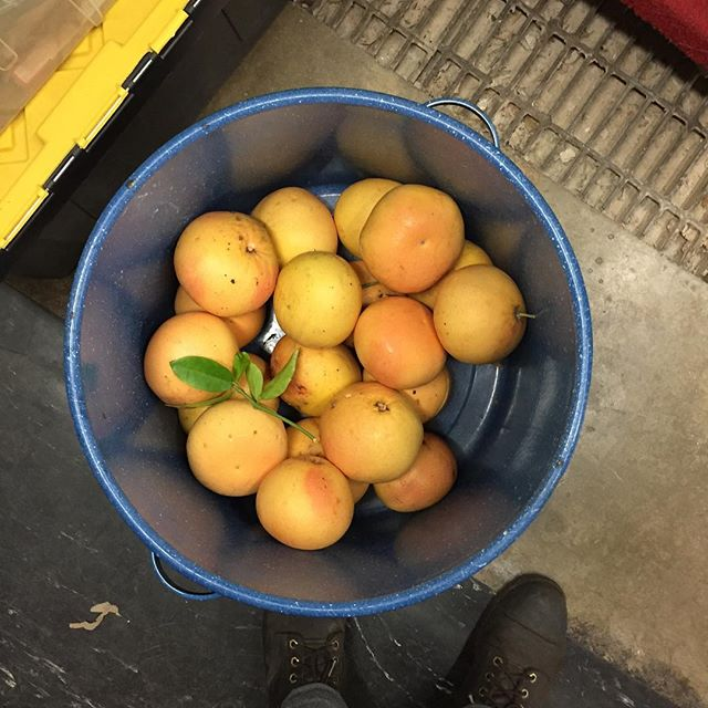 Happy hr at the shop tonight 5-7. Come and see what @etrine is brewing up with all these grapefruit