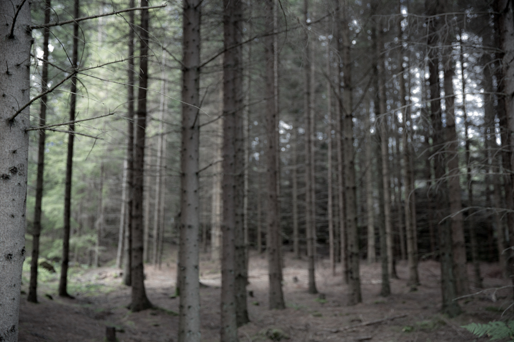 Woods:Djupedal©CamillaJensen_2015.jpg
