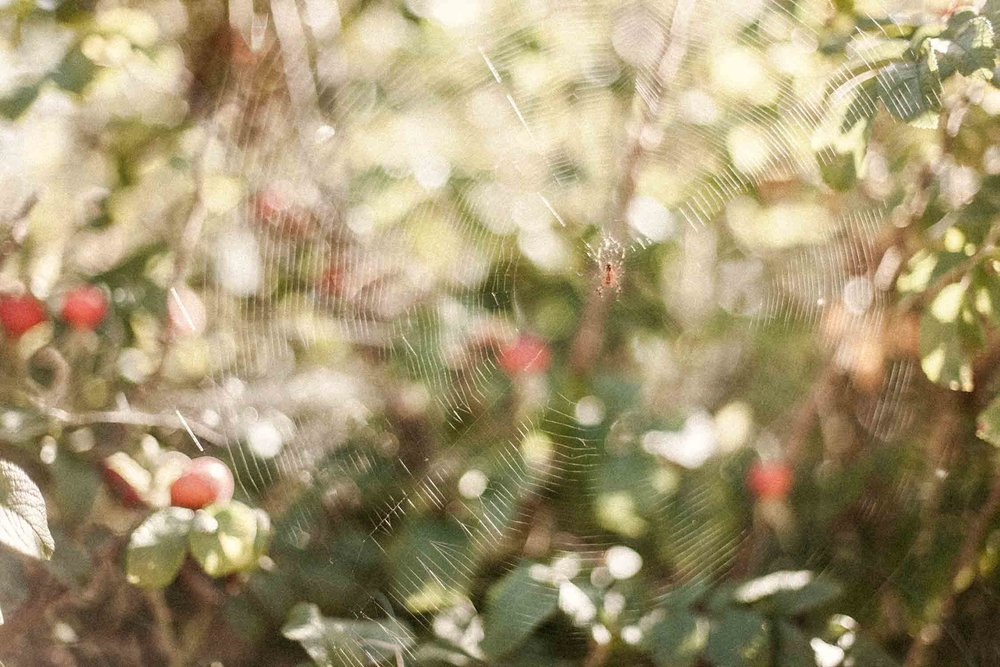 Djupedal_Spider_0166©CamillaJensen.jpg