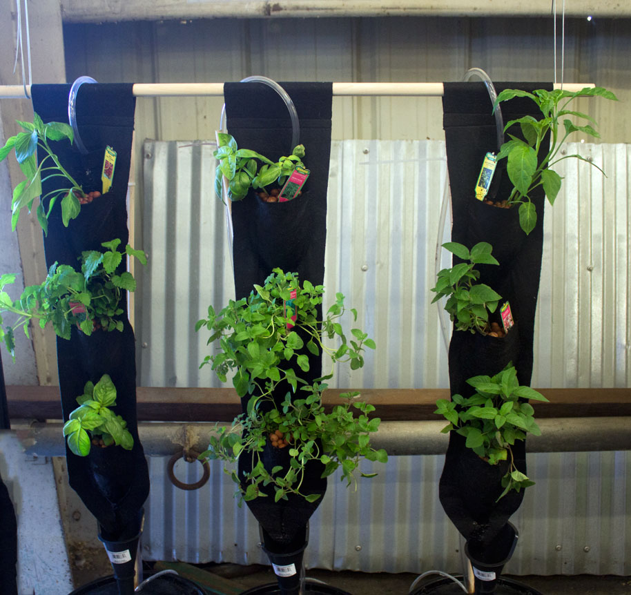 hydroponic_strawberries.jpg