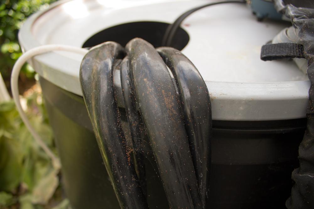 Even on my reservoir, spider mites find a home