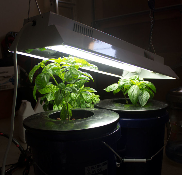 hydro grow light.jpg