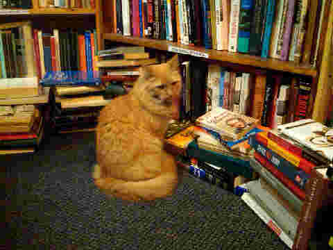 bookstore%20cat.jpg