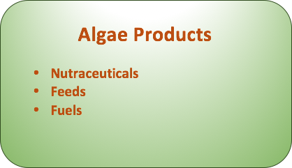 algae products.png