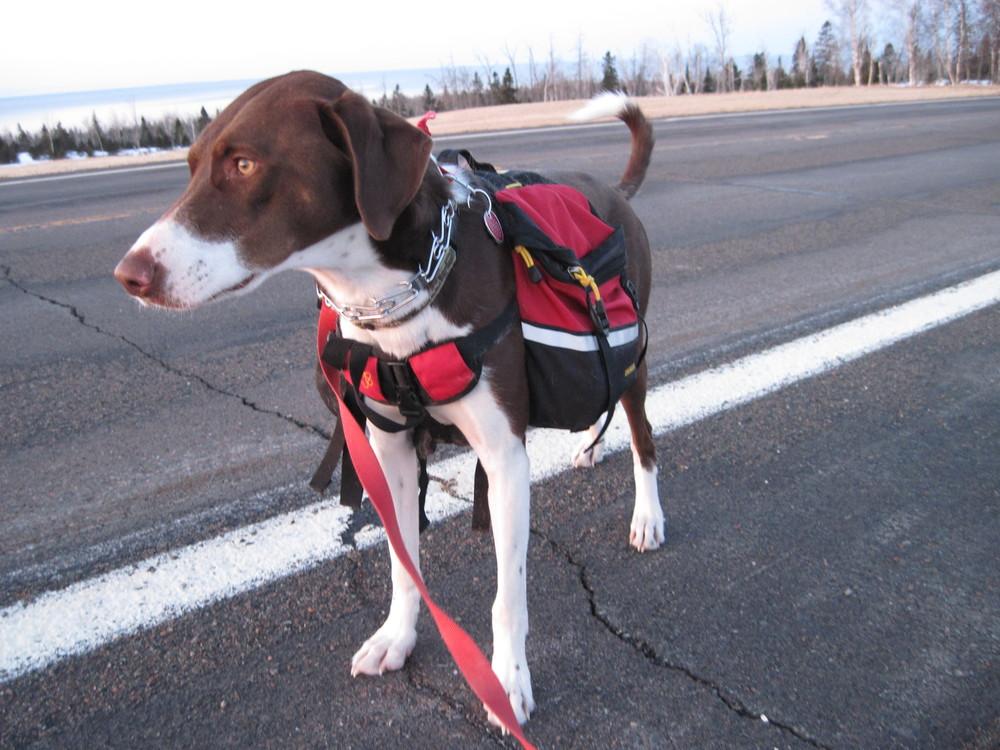 Lucky LaRoux on a Morning Walk