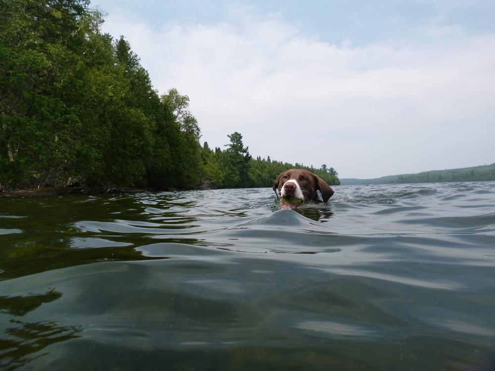 Lucky LaRoux takes a dip..JPG