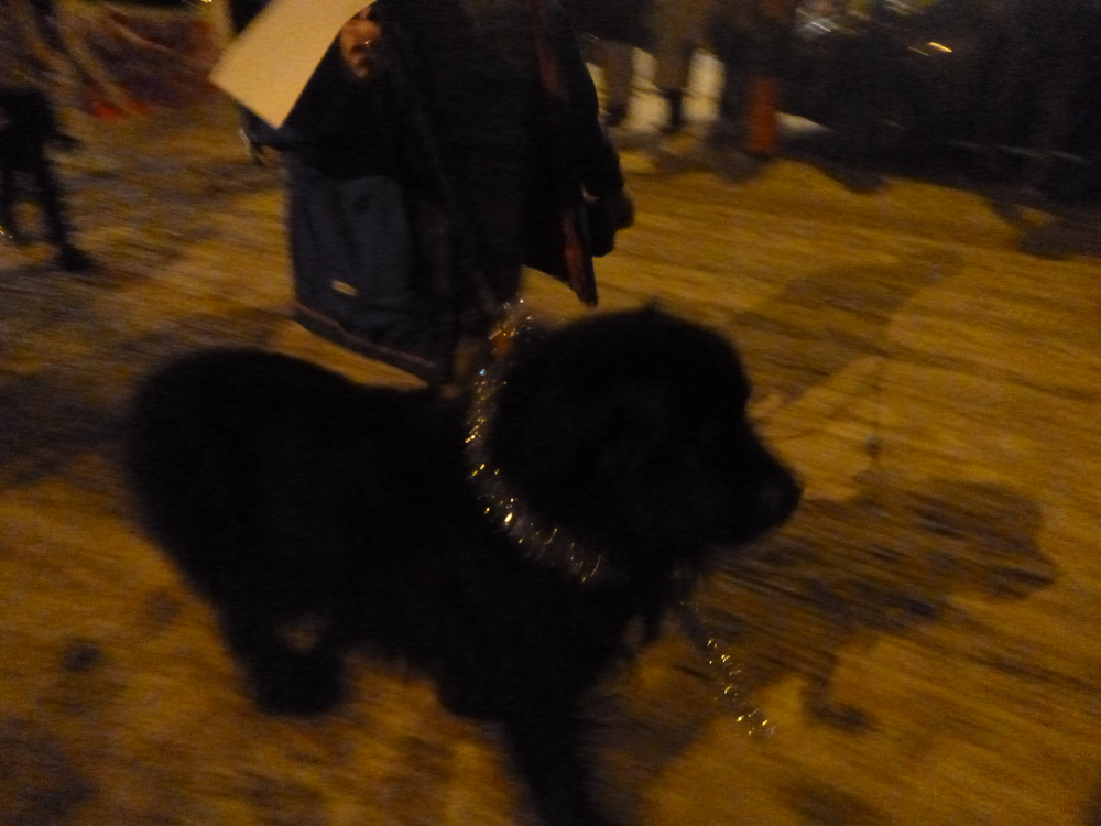 Big and handsome  Otis  was a real show stopper at the 2013 Grand Marais Christmas Parade.