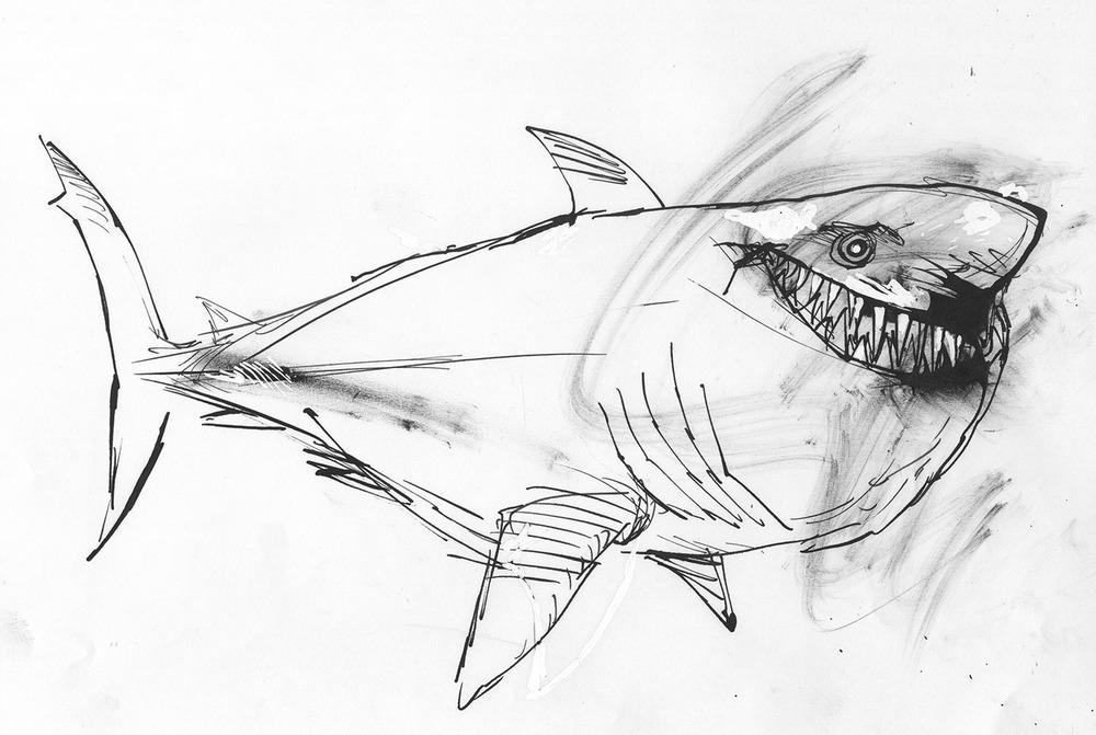 Sharks4.jpg