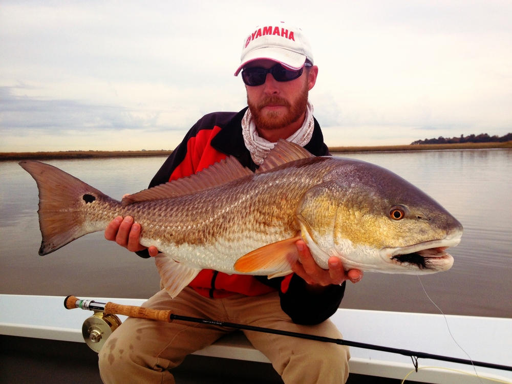17lb winter Redfish on Fly