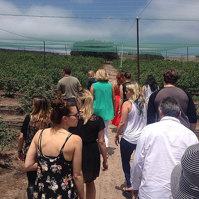 A day on the farm! Visiting the fabulous Forbidden Fruit Orchads and Cebada Vineyard in Lompoc to learn more about Sandy Newman's fabulous grapes, blueberries, mulberries, kiwis, green tea, bananas, and more! #adultfieldtrip