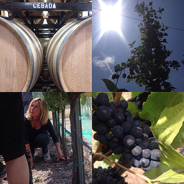 What a day at Forbidden Fruit Orchards in Lompoc! Between @cebadawine tastings, seeing my first hops plants, learning about the long process of creating a sparkling wine, and tasting fresh Pinot Noir juice, I'm leaving with a even deeper respect for solo owner and winemaker Sandy Newman. Cheers! #adultfieldtrip #santabarbarawine #forbiddenfruitorchards #lompoc