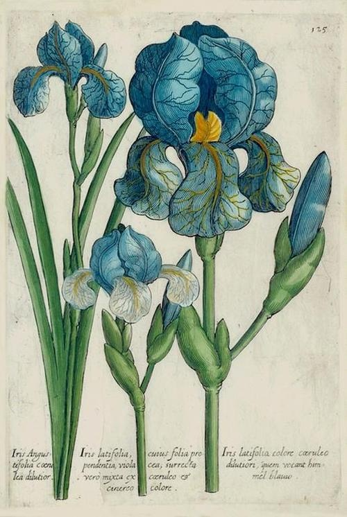 Botanical flowers (1).jpg
