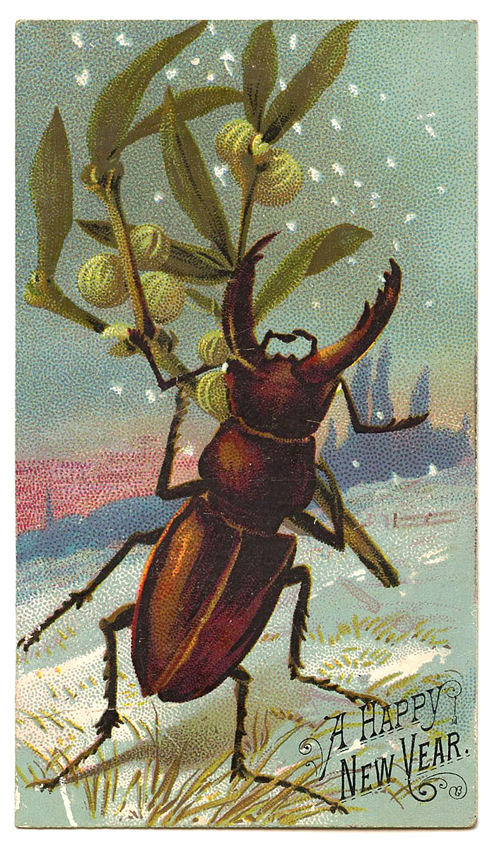Giant Stag Beetle carrying gooseberries through the snow on New Years Eve.