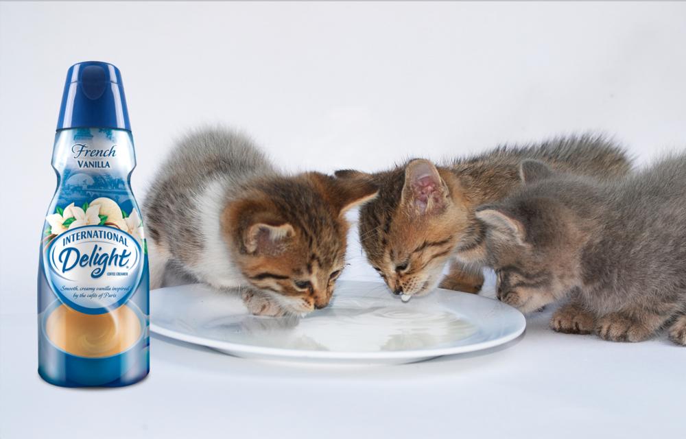 ID_kitty_cat2.jpg