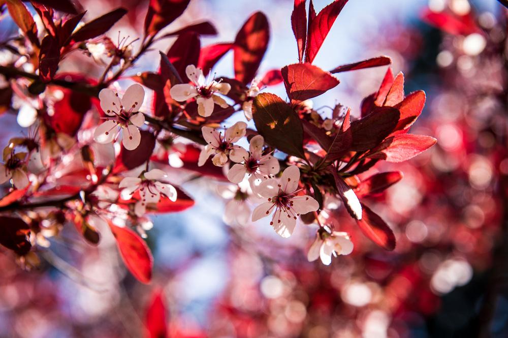 2012-04-06_NYC-Botanical-Gardens_109.jpg