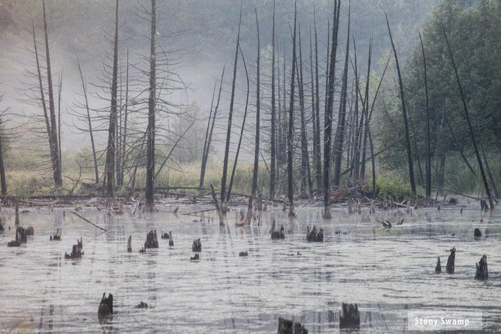 StoneySwamp2.jpg