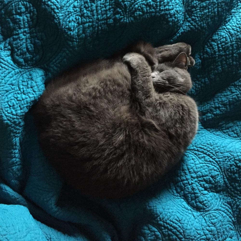 campbell-salgado-studio_hazel-the-studio-cat_portrait-photography_9682-2.jpg