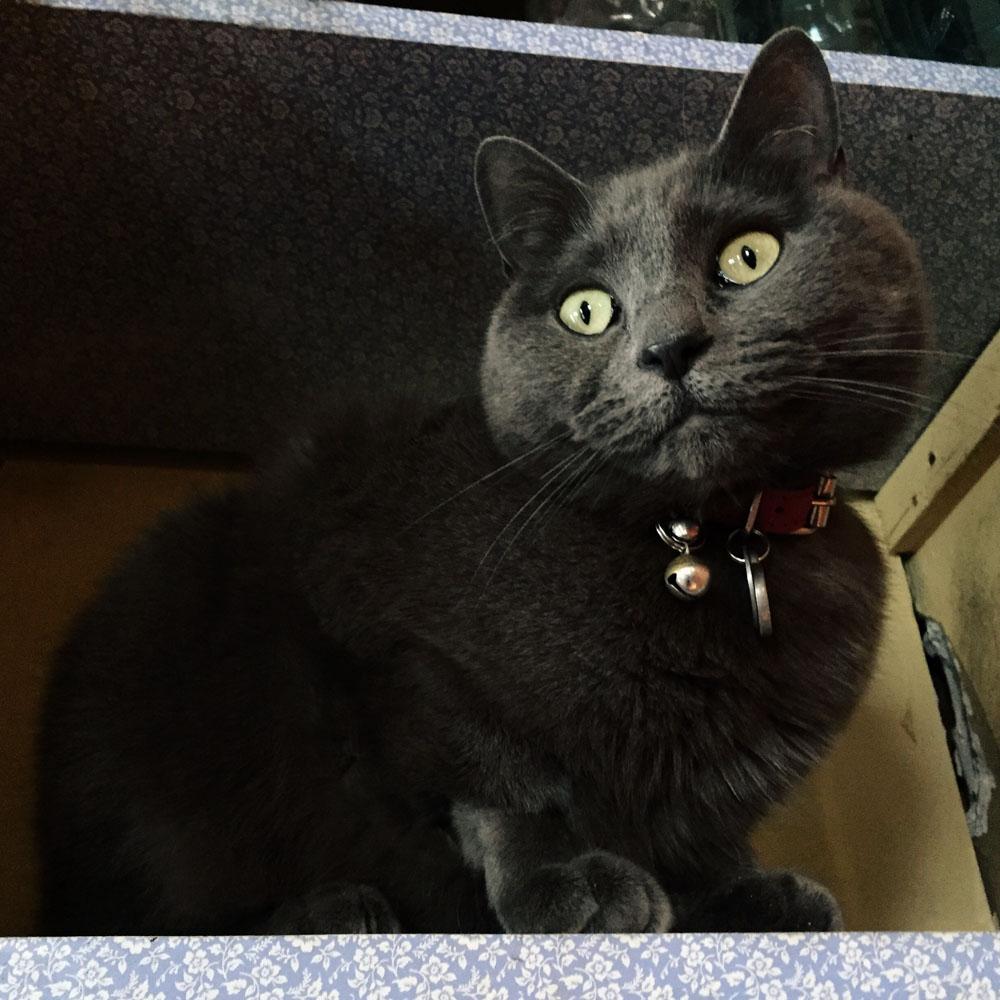 campbell-salgado-studio_hazel-the-studio-cat_portrait-photography_9841.jpg