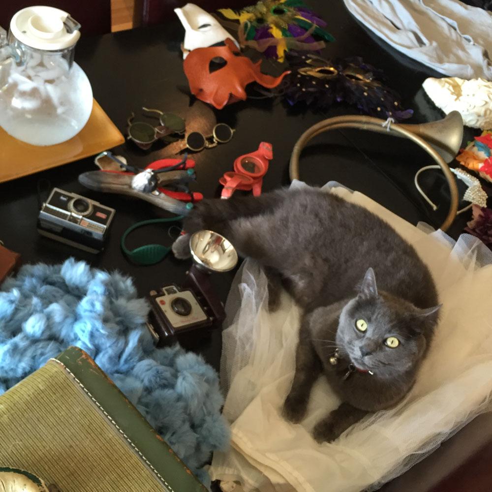campbell-salgado-studio_hazel-the-studio-cat_portrait-photography_9888.jpg