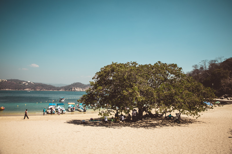 Shade dwellers at the beach!