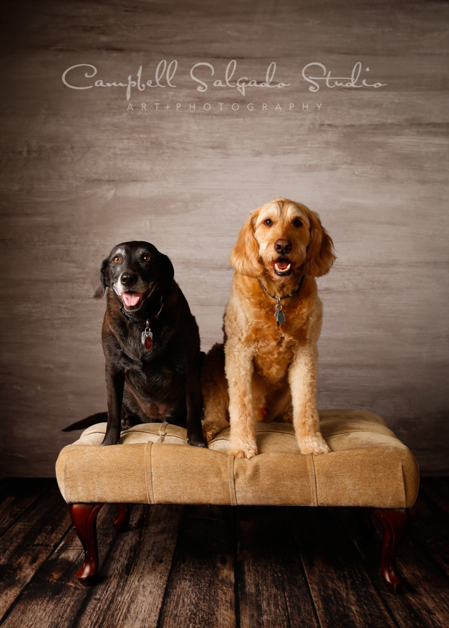 Portrait of dogs on graphite background by pet photographers at Campbell Salgado Studio in Portland, Oregon.