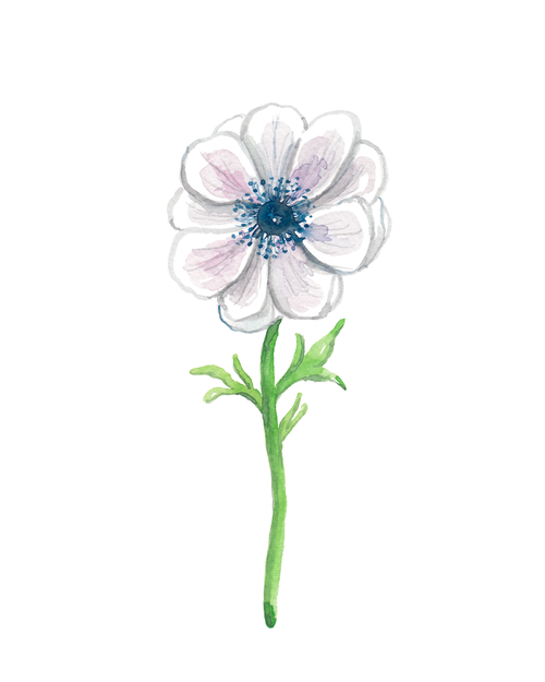 White-Anemone-Original-Painting (1).png