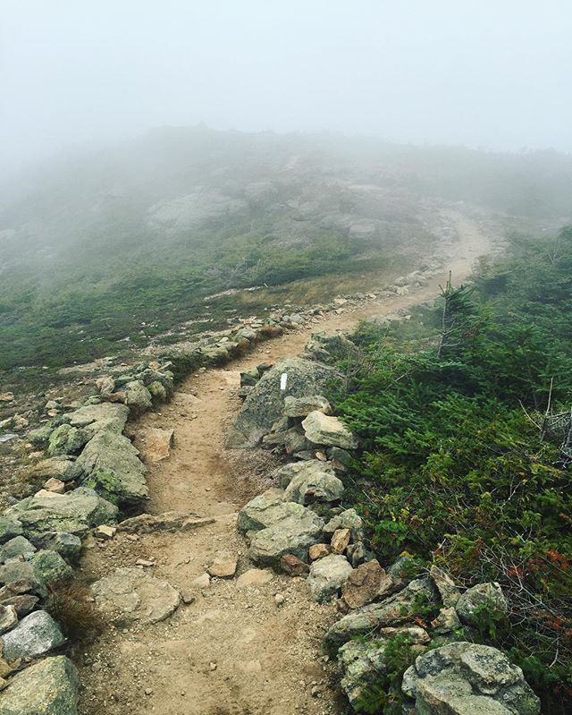 Follow the white blaze...because that's about all you can see. #trailblaze #hike #vertical #fieldnotes / #franconia #newhampshire