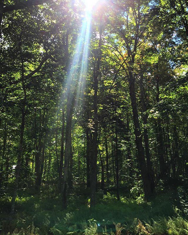 Into the woods, where I love to be 💚🌲 #sundayhike #getoutside #fieldnotes / #maine