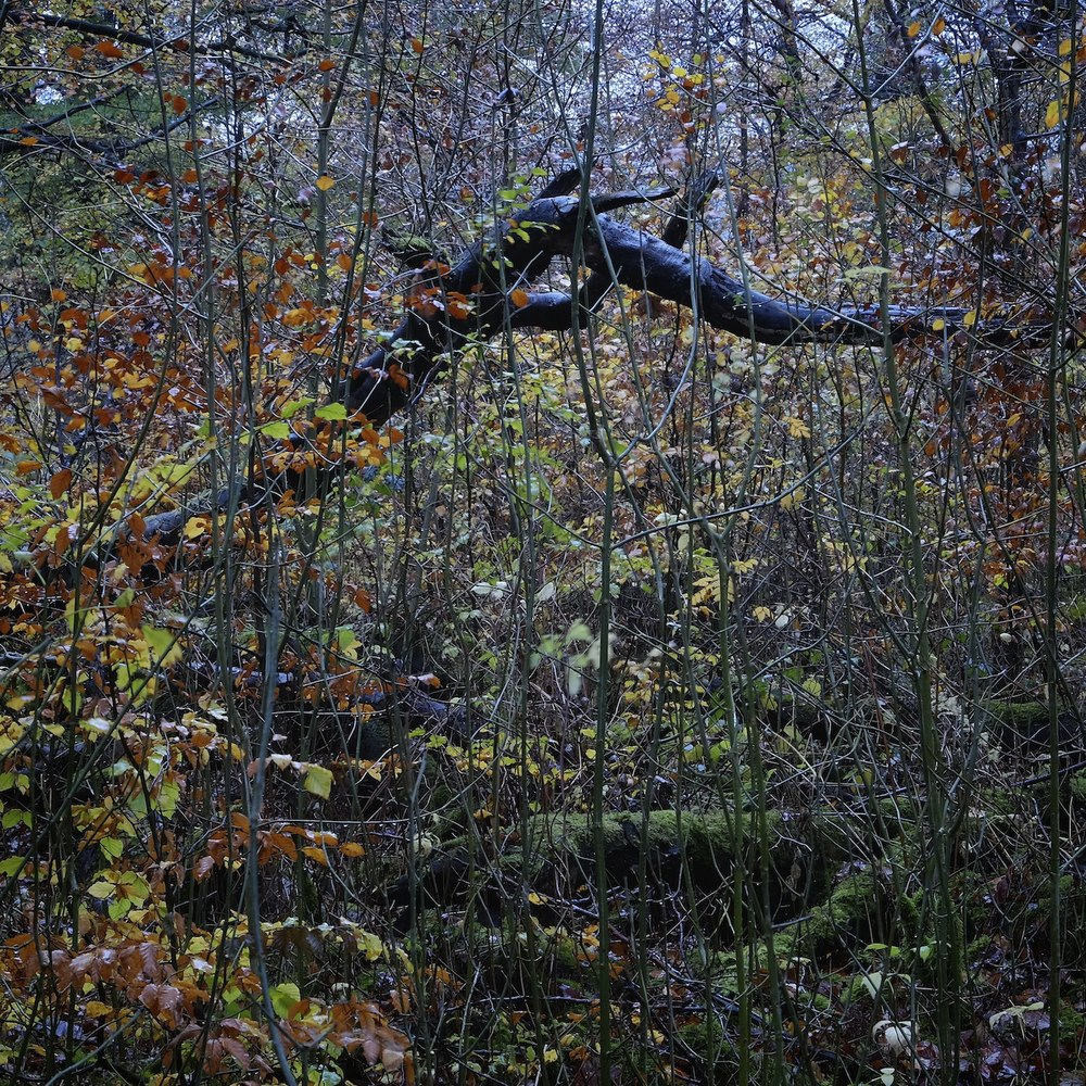 Christopher-Swan-Dumfries-House-Ayrshire-2014-Novemebr 82014-11-08.jpg