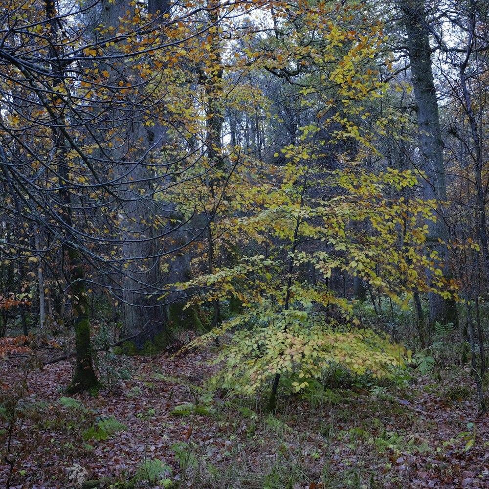 Christopher-Swan-Dumfries-House-Ayrshire-2014-Novemebr 112014-11-08.jpg
