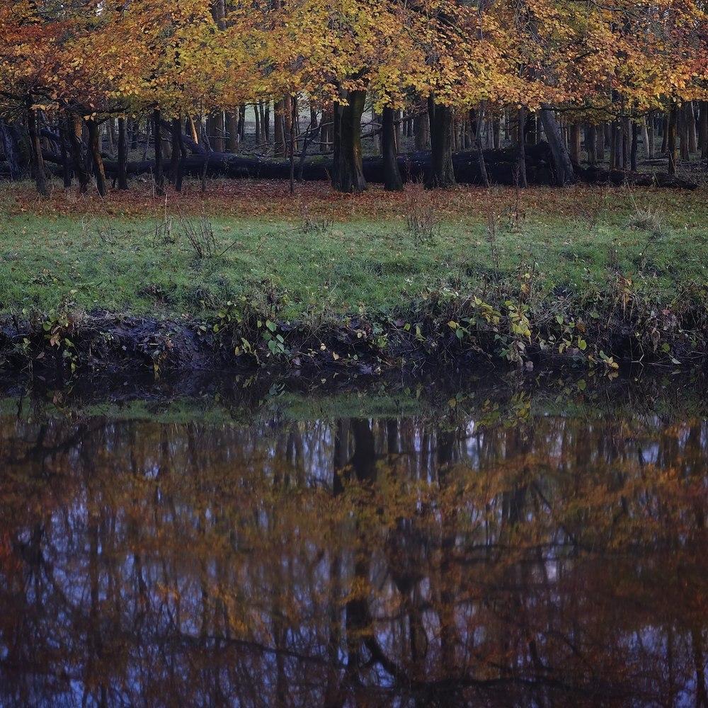 Christopher-Swan-Pollok-Park-Glasgow-2014-Novemebr 32014-11-09.jpg