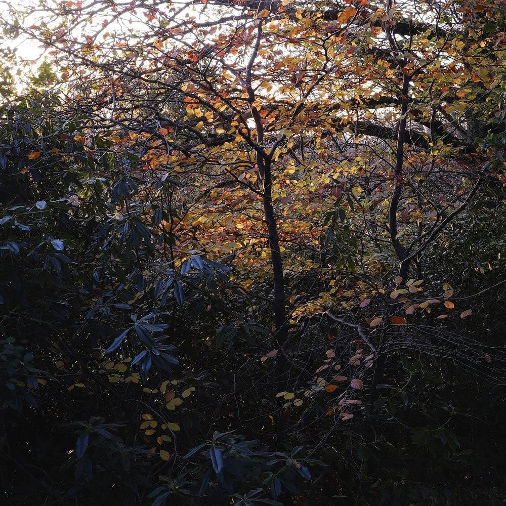 Christopher-Swan-Pollok-Park-Glasgow-2014-Novemebr 42014-11-09.jpg